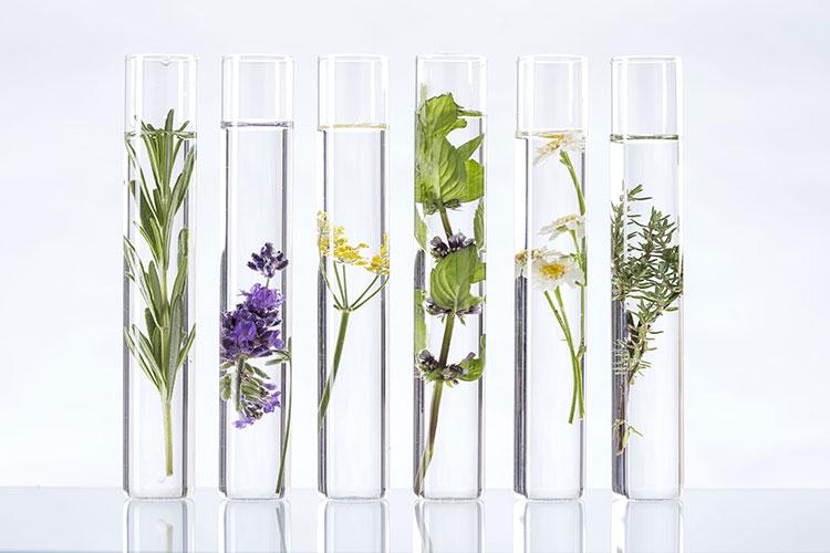 productos naturales cosmética ecológica bio